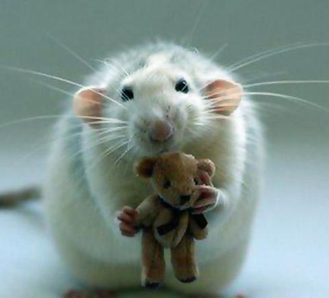 Подарък за мишка
