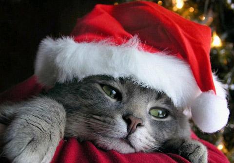 Скучна Коледа