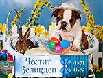 Честит Великден и от нас