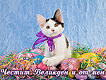 Честит Великден и от мен