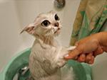 Мокро коте