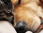 Куче и котка