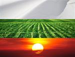 Бяло, зелено, червено